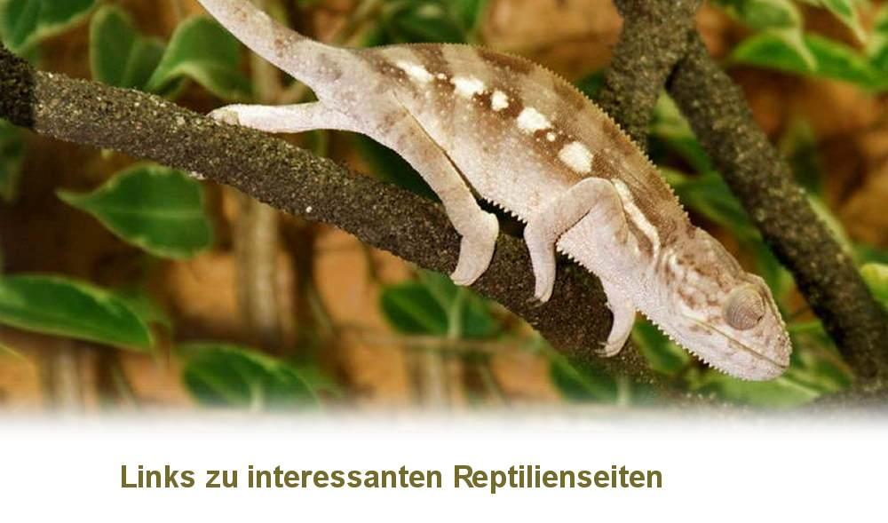 chameleon und reptilien links
